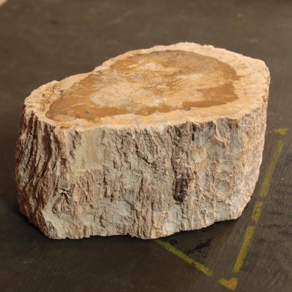 versteend hout fossiel